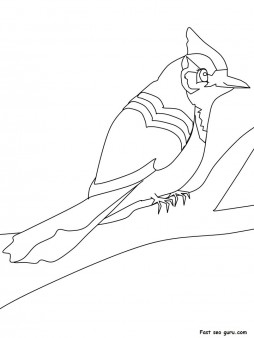 Print out Animals Birds Blue jay coloring pages