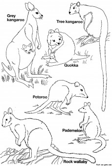 Printable Australian Animals coloring pages