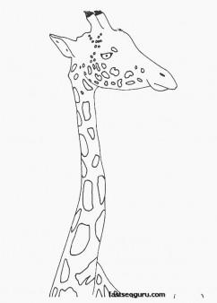 zarafa zoo coloring page