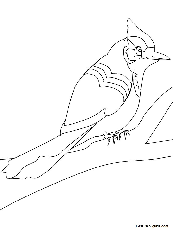 Free bluejay birds coloring pages