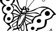 Butterfly coloring pages …