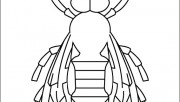Bee insect coloring pages…