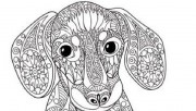 coloring pages of dog for…