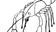 Printable ocean Lobster coloring page for childrens