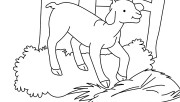 Printable Farm animal Baby goat Coloring page for kids