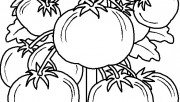Printable vegetable Tomatos coloring page