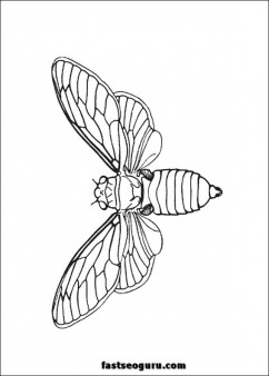 Bie insect kids coloring pages