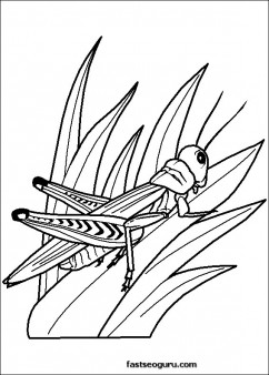 Grasshoppers childrens coloring sheets
