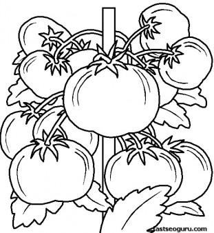 Printable vegetable Tomatos coloring page