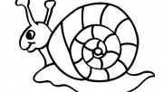 Printable coloring pages animal snails for kids